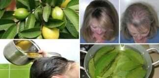 Bu Yapraklar % 100 Saç Dökülmesini Durdurur Ve Saçlarınızı Hızlı Büyütür