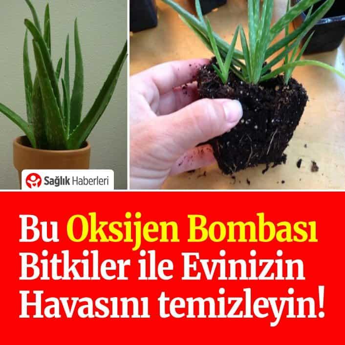 Bu oksijen bombası bitkiler ile evinizin havasını temizleyin!