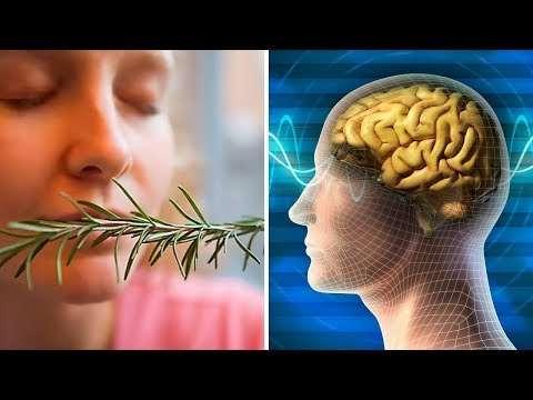 Hafızayı Güçlendiren Bu Bitkiyi Koklayınca Bakın Ne Oluyor!