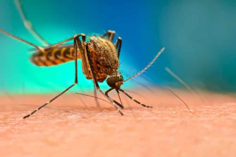 Batı Nil Virüsü tehdidine karşı alınabilecek önlemler!