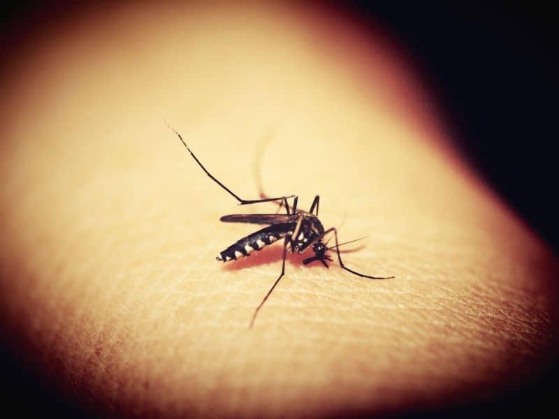 Sivrisineklerin bulaştırabileceği hastalıklar nelerdir?