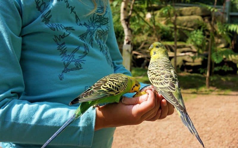 Severek beslediğiniz kuşlar katiliniz olmasın!