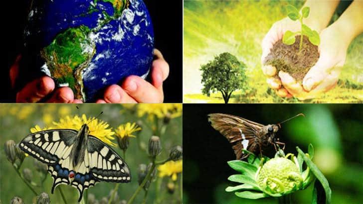 Sağlık ve ekosistem