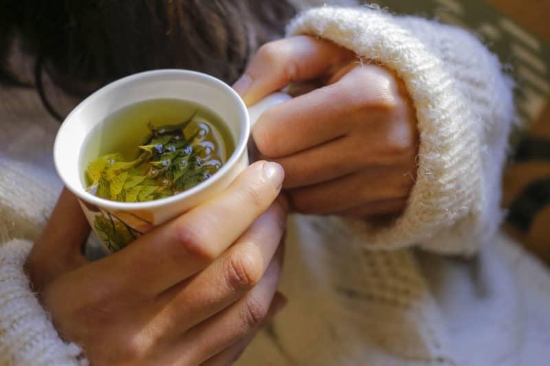 Dünyadaki en şifalı bitkilerden biri ada çayının faydaları