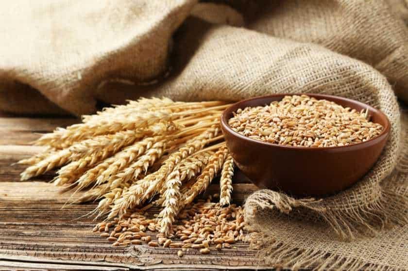Siyez buğdayı nedir? Neye iyi gelir, faydaları nelerdir?