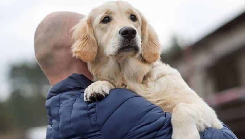Köpekler koronavirüs enfekte olan insanları tespit ediyor