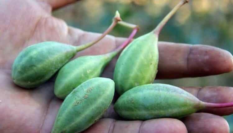 Binbir derde deva bu bitkinin faydalarına şaşıracaksınız!