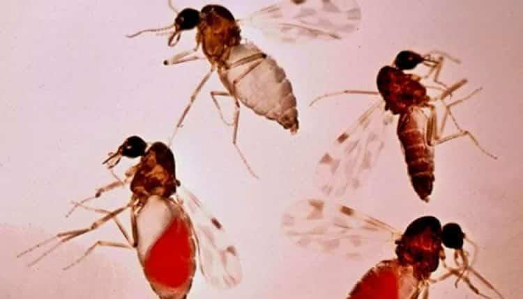Kör eden sineklerin görüldüğü o bölgemiz alarmda!