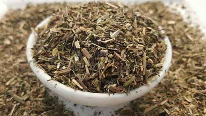 Guatr ve cilt kırışıklıkları için çözüm sunan şifacı: Yoğurt otu bitkisi