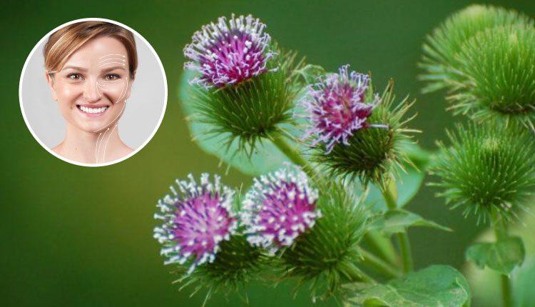 Botoks etkili güzelavrat otu (dulavrat otu) ne işe yarar?
